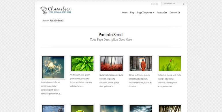chameleon portfolio